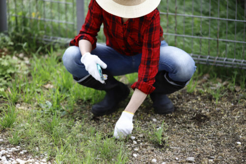 ガーデニング初心者必見!自分で庭を手入れする方法まとめ